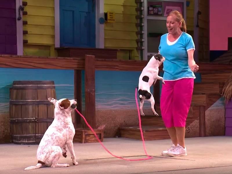 atração mais divertida do seaworld - pets ahoy seaworld - diversão para toda família - animais seaworld - Seaport Theater