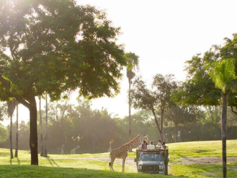atrações do Busch Gardens - parque temático Busch Gardens - Serengeti Safari - montanha-russa - Iron Gwazi